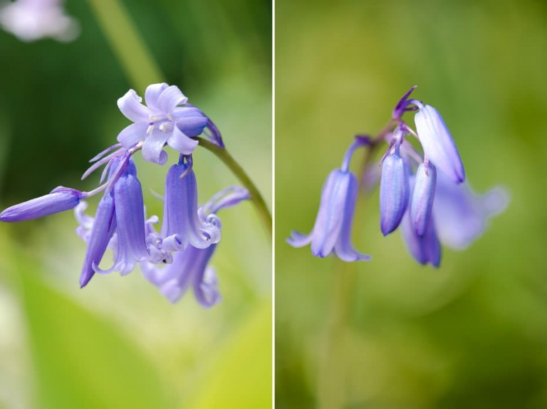 The Secret Life Of Bluebells 5